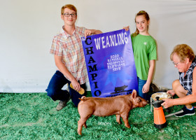 Champion Weanling Gilt 2020