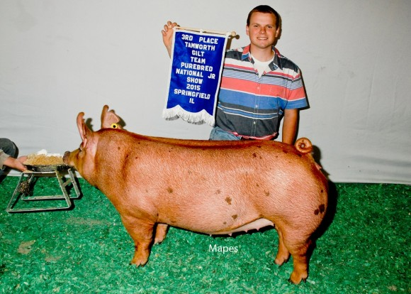 3rd Place Tamworth Gilt, Mitchell Concanan