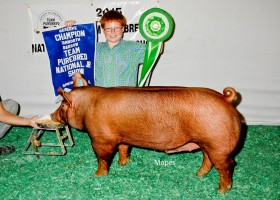 Reserve Champion Barrow and Champion Bred and Owned Barrow, Cody Hankes