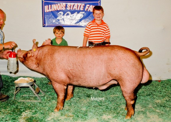 Reserve Senior Boar, Golden Acres Farm