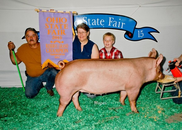 Reserve Grand Champion Gilt, Clyde James Family