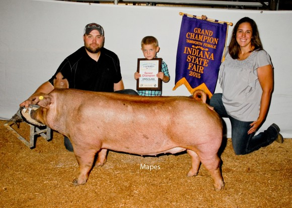 Grand Champion Gilt Open Show, Sugar Creek Genetics