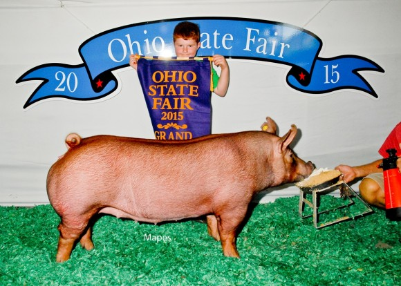 Grand Champion Gilt, Lucas Bradshaw