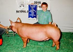 5th Place Tamworth Gilt, Cody Hankes