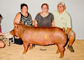Champion Senior Gilt, Jeff Gulick and Family