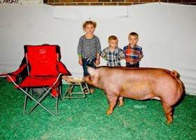 Reserve Grand Champion Gilt, Clint High Farms
