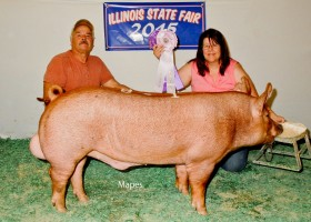 Reserve Grand Champion Boar, Clyde James Family