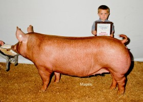 Junior Champion Open Show, Clint High Farms