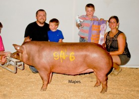 Reserve Grand Champion Gilt, Wade Smith