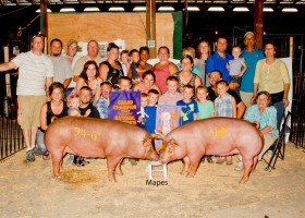 Grand and Reserve Grand Champion Gilts, Clint High Farms
