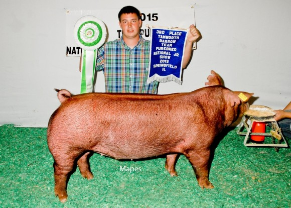 3rd Place Tamworth Barrow and Reserve Bred and Owned Barrow, Rose Moore