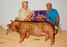 Grand Champion Boar, Clint High Farms
