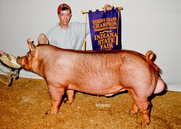 Grand Champion Boar, Samuel Diehm