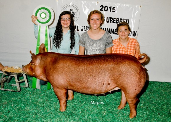 Reserve Champion Bred and Owned Gilt, Emily Tricker