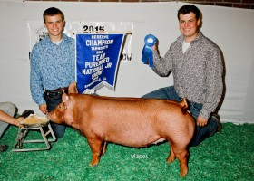 Reserve Champion Tamworth Gilt, Corey Jodrey