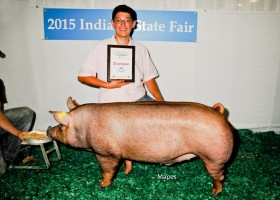 Champion Barrow Junior Show and Champion Tamworth Showman, Tate Coulter
