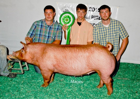 Champion Bred and Owned Gilt, Joseph Moore