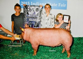 Reserve Champion Barrow Junior Show and Reserve Tamworth Barrow IJSC, Cylee Morris
