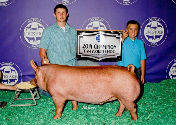 Dalton Guffey, Champion Tamworth Gilt